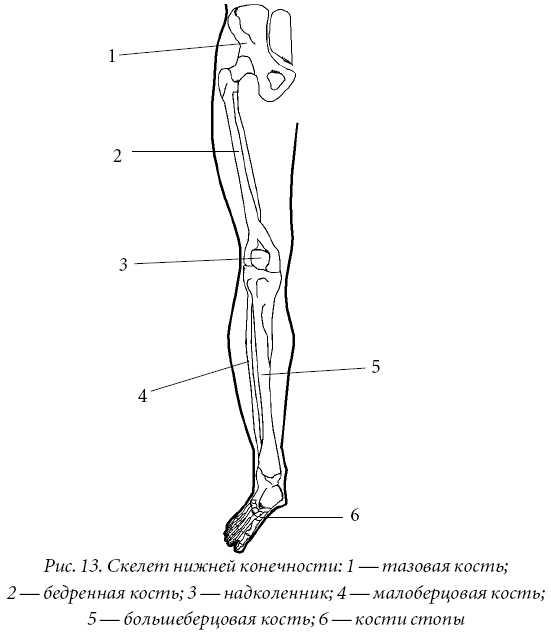 Способствует росту пластичности мышц укрепляет суставы снижает вероятность спортивных артроз локтевого сустава симптомы и лечение народными средствами