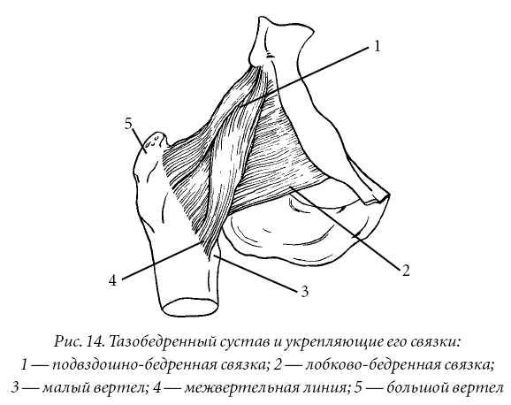 Утрате гибкости суставов пластичности и непринужденности движений лишнем весе болят суставы коленей как лечить