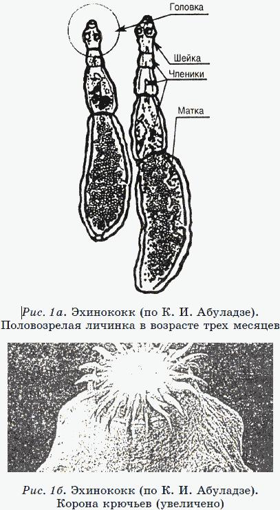 Новые тайны нераспознанных диагнозов. Книга 2