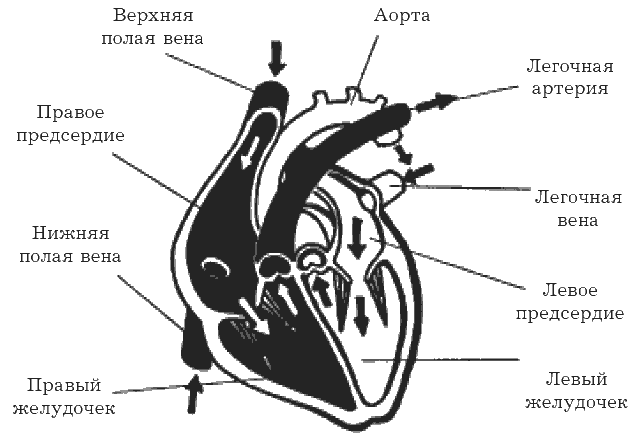 Я и моё сердце. Оригинальная методика реабилитации после инфаркта