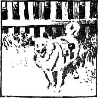 Пурпурная мумия (Сборник с иллюстрациями)