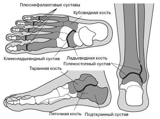 Суставы стопы и голеностопный