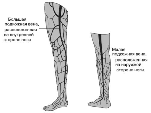 как найти вену на ноге