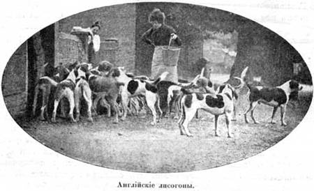 Наши домашнiя животныя. Собаки