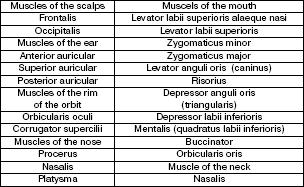 Английский язык для медиков
