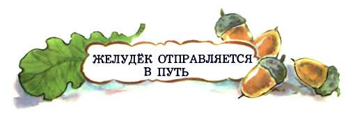 Желудёк